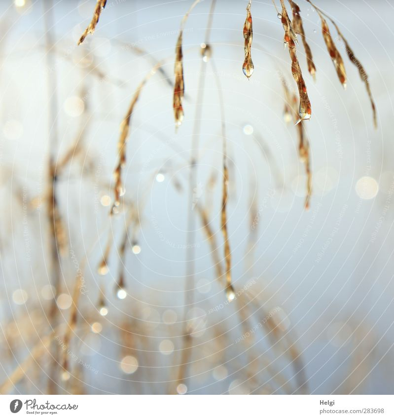 Nature Blue Beautiful White Plant Environment Autumn Grass Sadness Brown Natural Exceptional Glittering Fog Growth Authentic