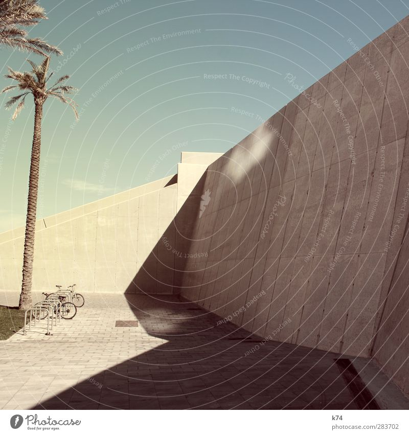 bikes & palmtrees Sky Cloudless sky Tree Palm tree Wall (barrier) Wall (building) Bicycle Stone Exotic Large Hot Modern Town Warmth Blue Yellow Cool (slang)