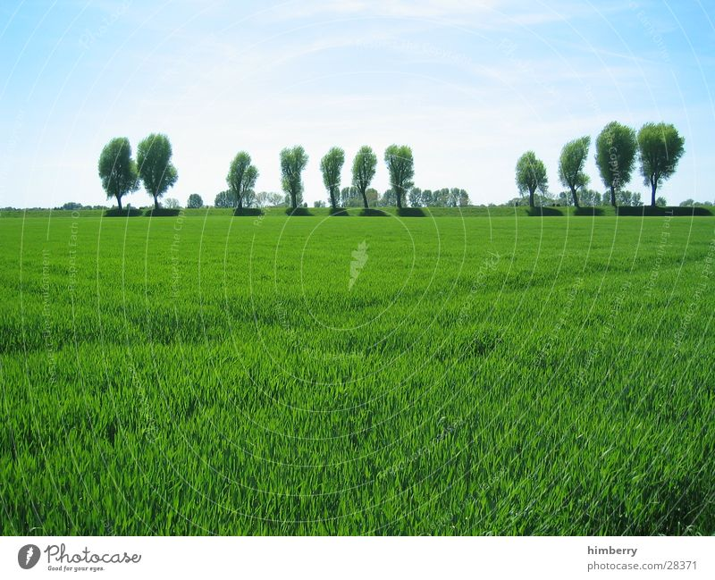 green wave Duesseldorf Rhine Coast Meadow Summer Tree Nature Landscape Grass Green Field Sky Agriculture Organic produce Organic farming Ecological Spring