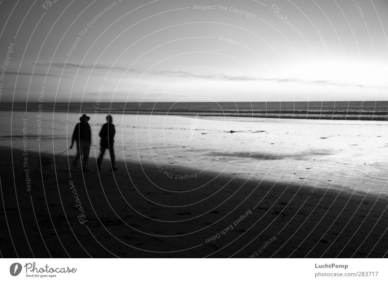 Dog Man Water Ocean Calm Beach Dark Sand Going Horizon Friendship Together Idyll Walking Hiking To go for a walk