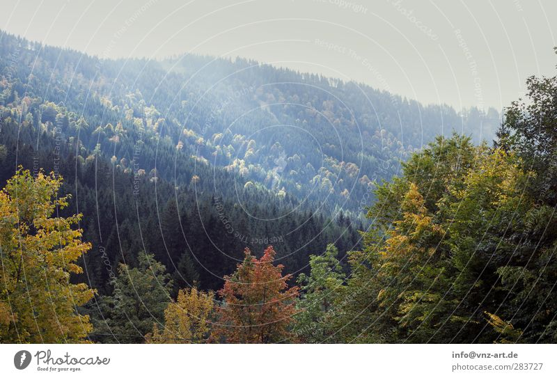 Sky Nature Blue Vacation & Travel Tree Sun Forest Yellow Mountain Autumn Gray Moody Orange Hiking Climbing Mountaineering