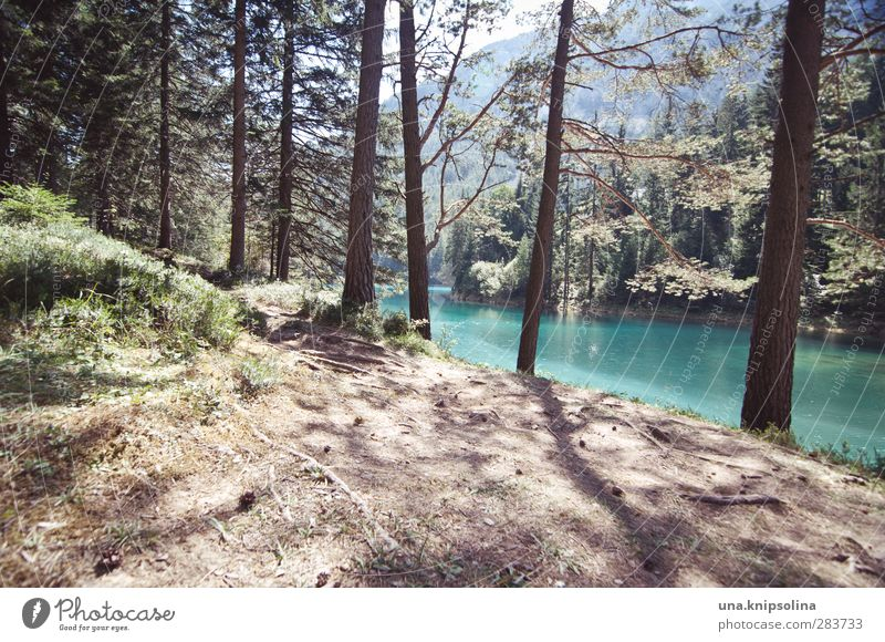 Green Lake Relaxation Calm Environment Nature Landscape Water Forest Alps Mountain Mountain lake Natural Blue Turquoise Considerable Colour photo Exterior shot