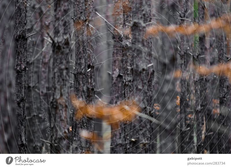 Nature Plant Tree Leaf Calm Landscape Winter Forest Autumn Emotions Time Moody Brown Orange Transience Eternity