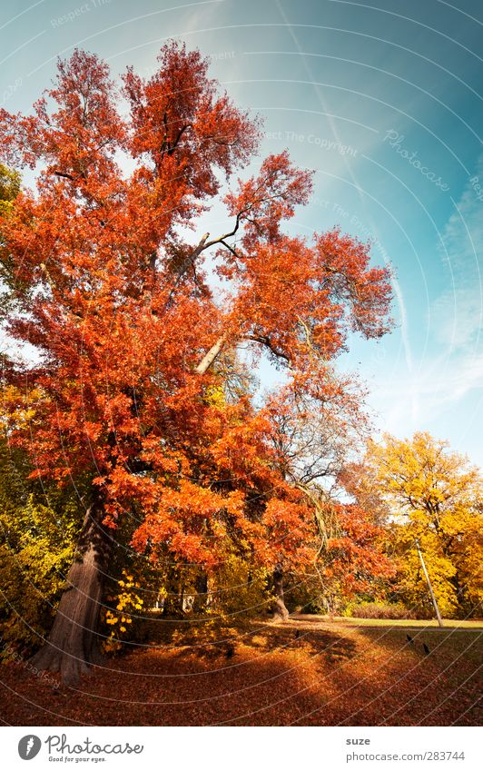 red october Environment Nature Landscape Sky Autumn Climate Weather Beautiful weather Tree Park Meadow Natural Blue Yellow Red Autumnal Early fall Autumn leaves