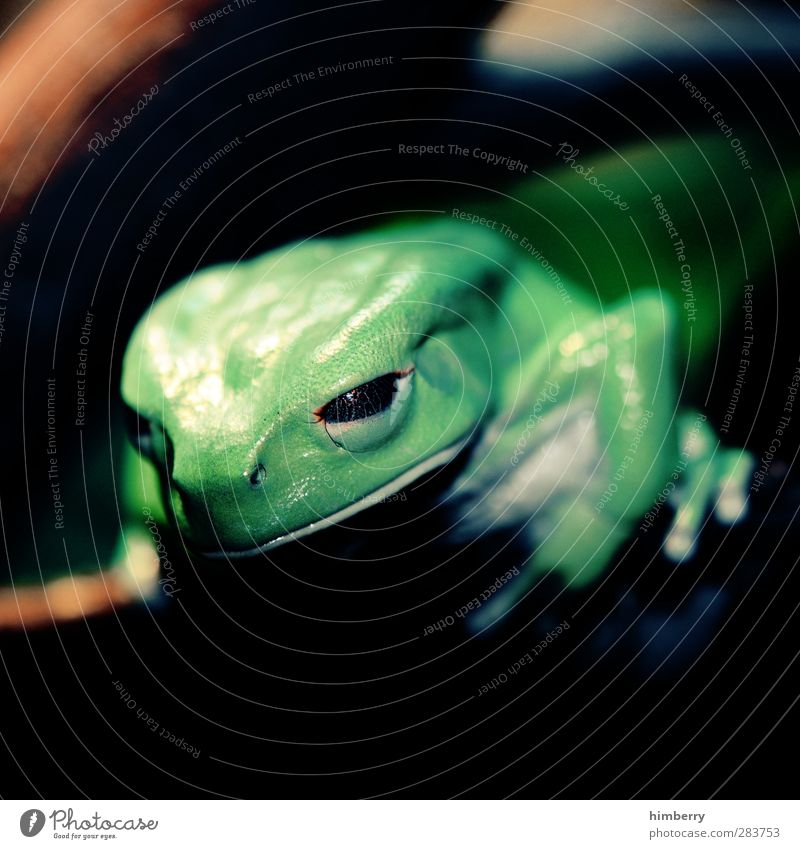 eyeball Environment Nature Climate Climate change Weather Beautiful weather Bad weather Garden Park Animal Pet Wild animal Frog Zoo Aquarium 1 Discover