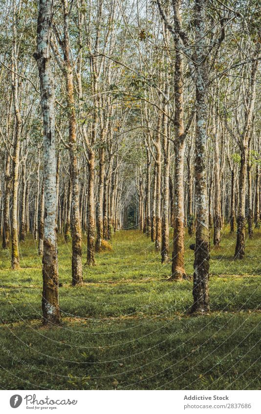 Rows of trees in forest Forest Green Spring Tree Nature Seasons Environment Beautiful