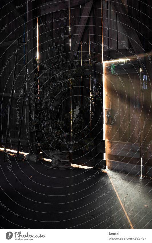 Dark Wood Building Open Door Illuminate Hut Ladder Barn Beam of light Incidental Barn door Wooden ladder
