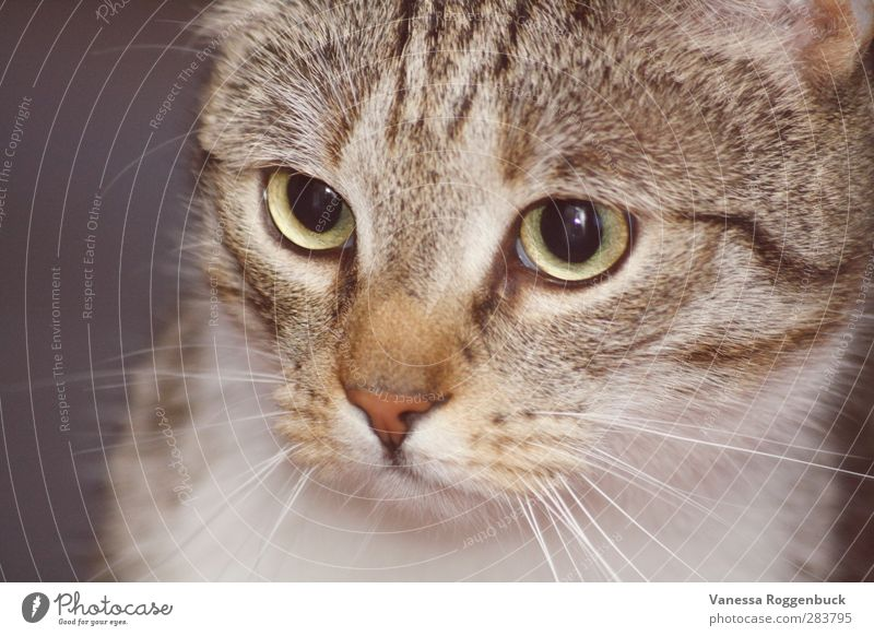 concentrated cat/cat ! Animal Pet Cat Animal face Pelt 1 Baby animal Looking Exceptional Cool (slang) Fat Happy Creepy Beautiful Small Funny Muscular Eroticism