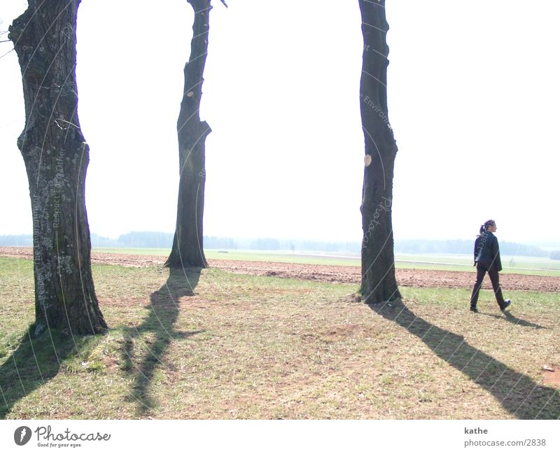 trilogy Tree Creussia Human being To go for a walk