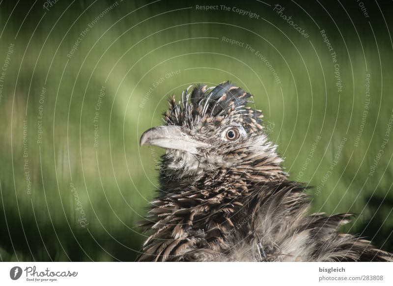 Moment VII Zoo Animal Bird Animal face Beak Eyes Feather 1 Looking Brown Gray Green Colour photo Exterior shot Deserted Copy Space left Copy Space top Day
