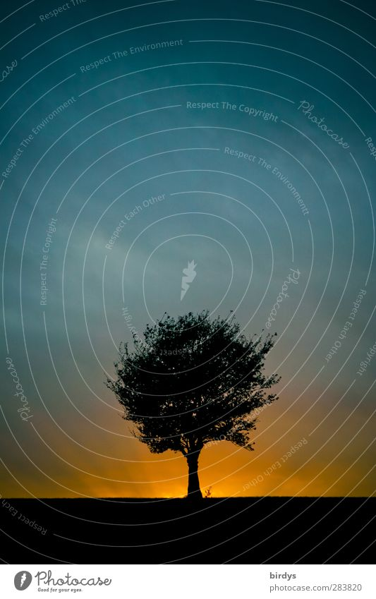 The 5 elements... Nature Landscape Storm clouds Sunrise Sunset Weather Tree Illuminate Esthetic Exceptional Threat Fantastic Blue Orange Black Might Belief