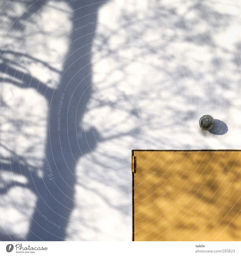 Shadows of himself. . . House (Residential Structure) Environment Nature Plant Autumn Winter Tree Building Wall (barrier) Wall (building) Facade Door Lamp