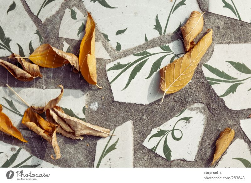 interaction Environment Nature Plant Autumn Climate Climate change Tree Leaf Foliage plant Wild plant Garden Park Wall (barrier) Wall (building) Esthetic