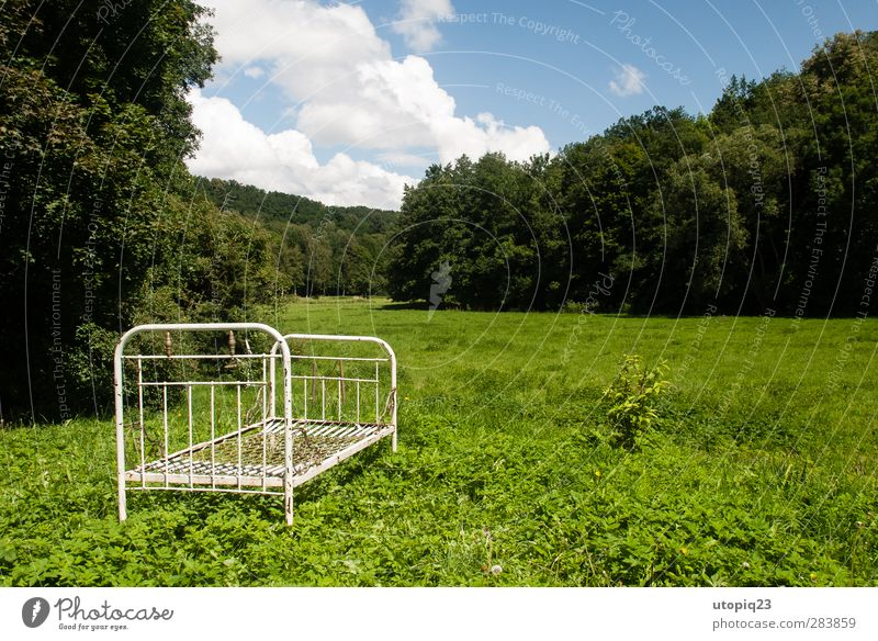 Nature Summer Loneliness Calm Landscape Relaxation Forest Meadow Time Metal Horizon Natural Living or residing Bed Transience Decline