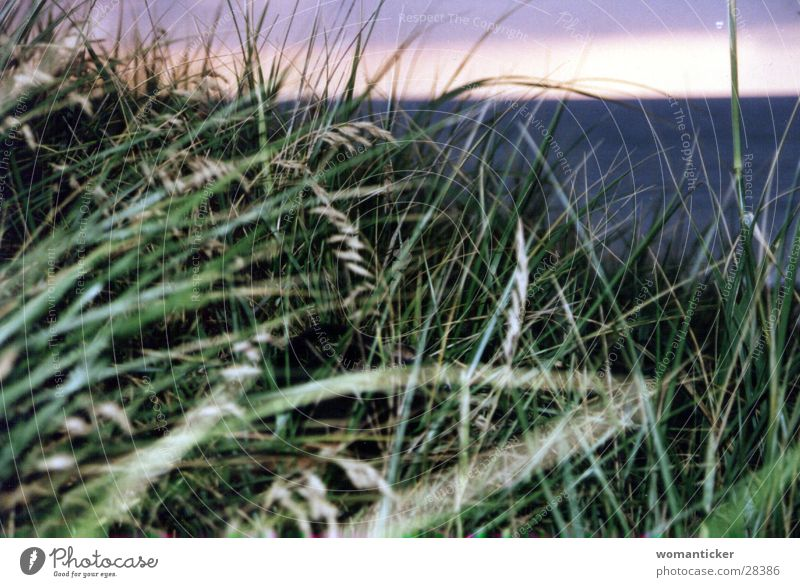 Grass by the sea Green Ocean Summer Vacation & Travel reed grass Baltic Sea Beach dune