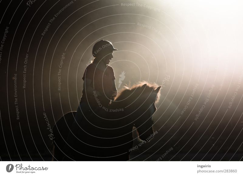 The happiness of the earth..... Ride Equestrian sports Rider Human being Woman Adults Body Upper body 1 Fog Dust Animal Farm animal Horse Iceland Pony Movement