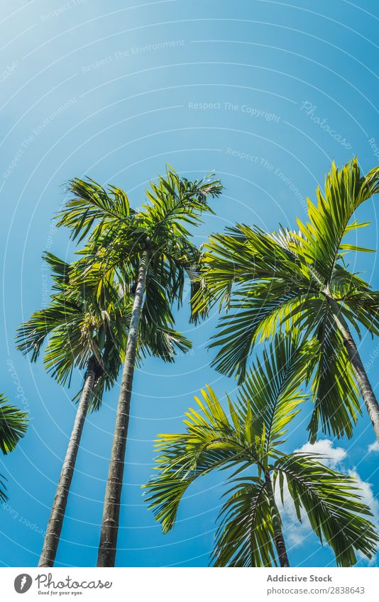 Palm trees in sunny day Palm of the hand Sunbeam Day Beach Summer Ocean Nature Tropical
