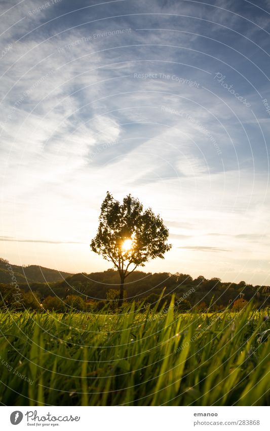 Tree against light Vacation & Travel Summer vacation Mountain Environment Nature Landscape Plant Sky Clouds Sun Climate Weather Grass Foliage plant Meadow Field