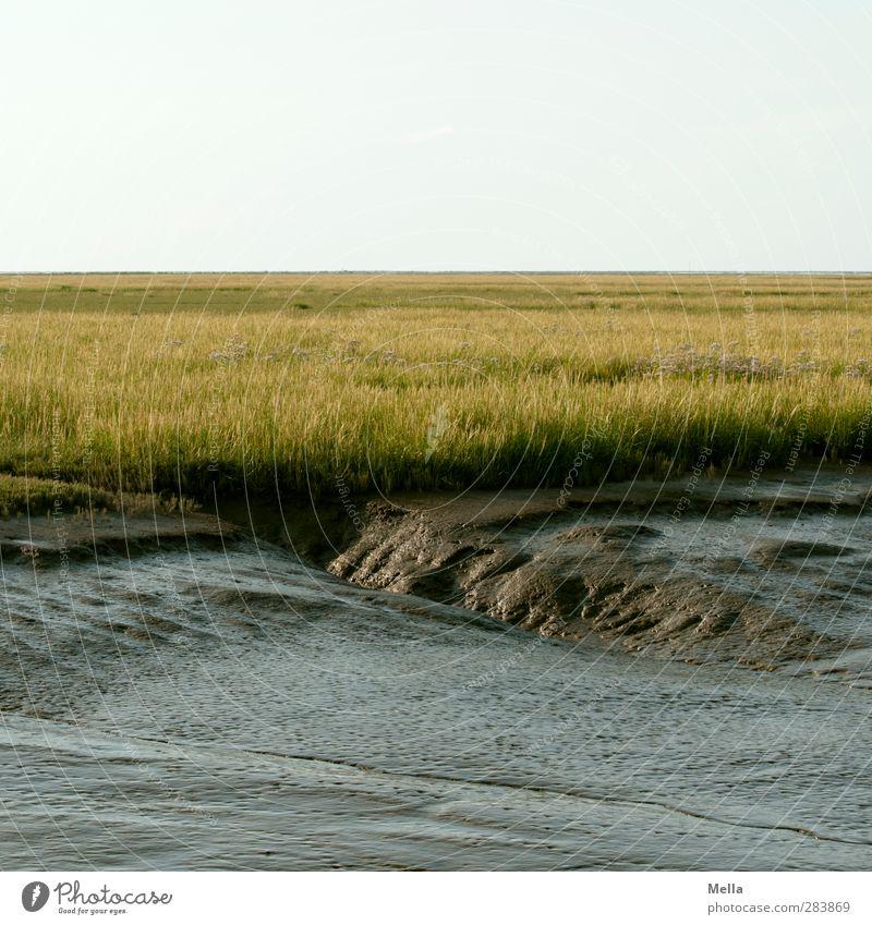 Watt sexy Environment Nature Landscape Elements Earth Grass Meadow Coast North Sea Mud flats Slick Salt meadow Wet meadow Koog grove Natural Relaxation Horizon