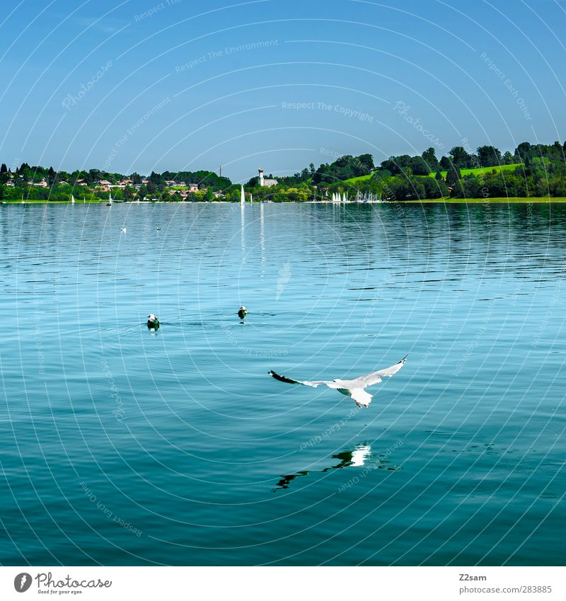 low-flying aircraft Environment Nature Landscape Water Cloudless sky Summer Beautiful weather Flower Meadow Lake Bird Cold Sustainability Natural Clean Movement