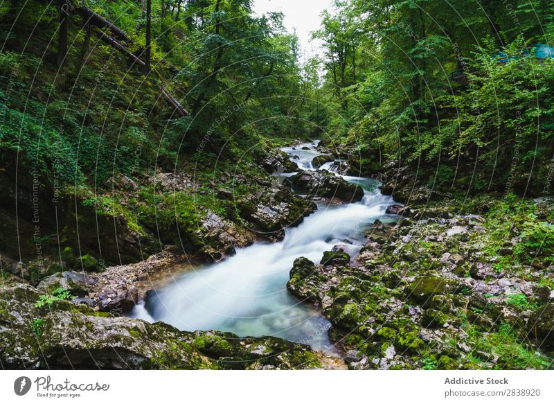 River flowing in green forest Mountain Forest Summer Water Landscape Nature Beautiful