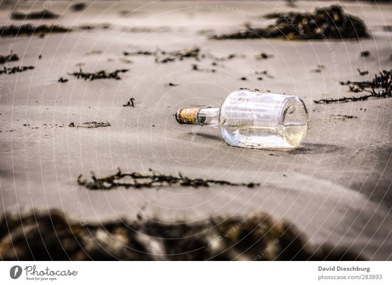 You have mail... Vacation & Travel Adventure Ocean Island Nature Sand Spring Summer Autumn Plant Coast Beach Bay Brown Yellow Black White Message in a bottle