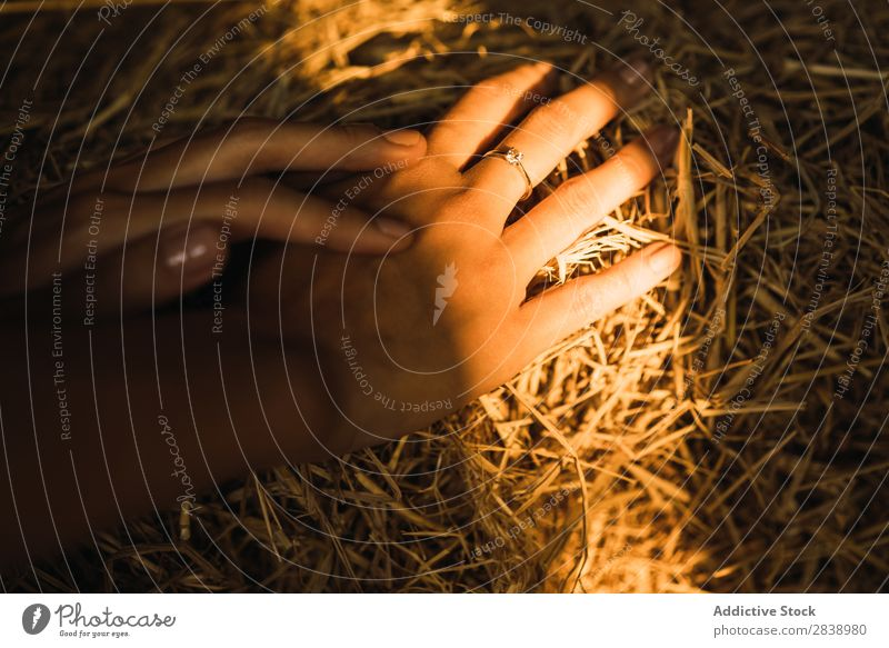 Crop hands in a haystack Yellow Crops Rural Farm Stack Landing Wheat Structures and shapes