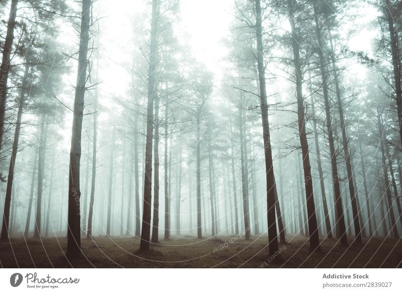 Woods in foggy forest Forest Nature Autumn Fog Trunk Seasons