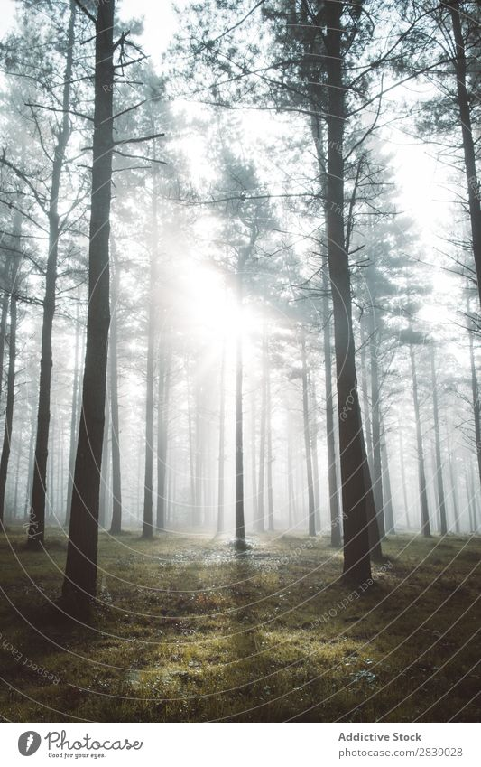 Woods in foggy forest Forest Nature Autumn Fog Trunk Seasons Landscape Park Beautiful Multicoloured Natural Leaf Light Environment Plant scenery Sunbeam Tourism