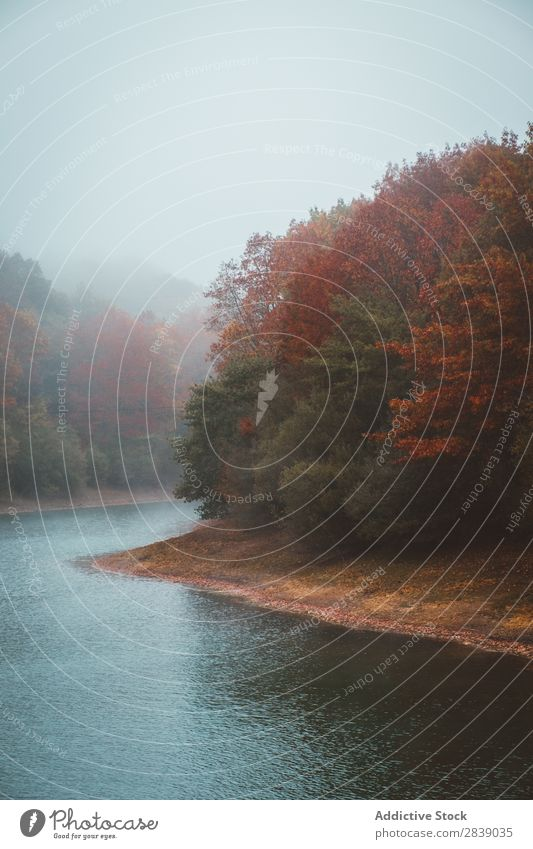 Autumn forest and river Forest Nature River Water Fog Seasons
