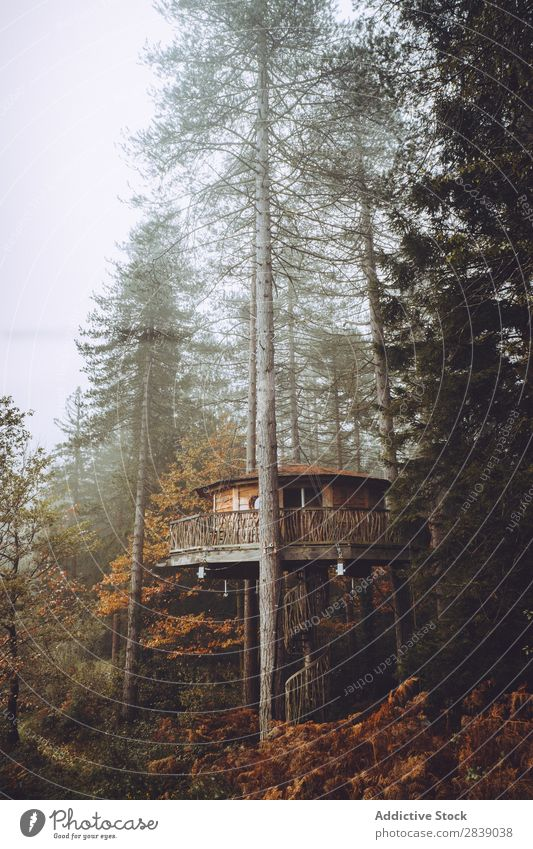 House in foggy autumn forest Forest Nature Autumn Building House (Residential Structure) Fog Trunk