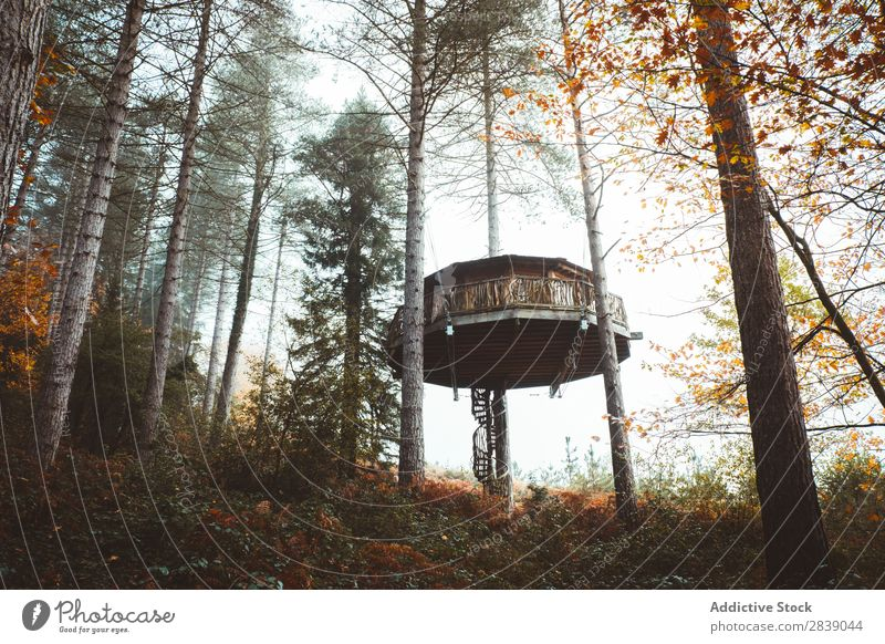 House in foggy autumn forest Forest Nature Autumn Building House (Residential Structure) Fog Trunk Seasons Landscape Park Beautiful Multicoloured Natural Leaf