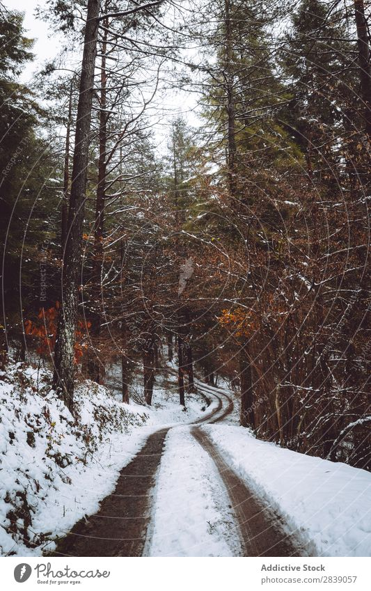 Road in white forest Forest Nature Winter Street White House (Residential Structure) Snow Rural