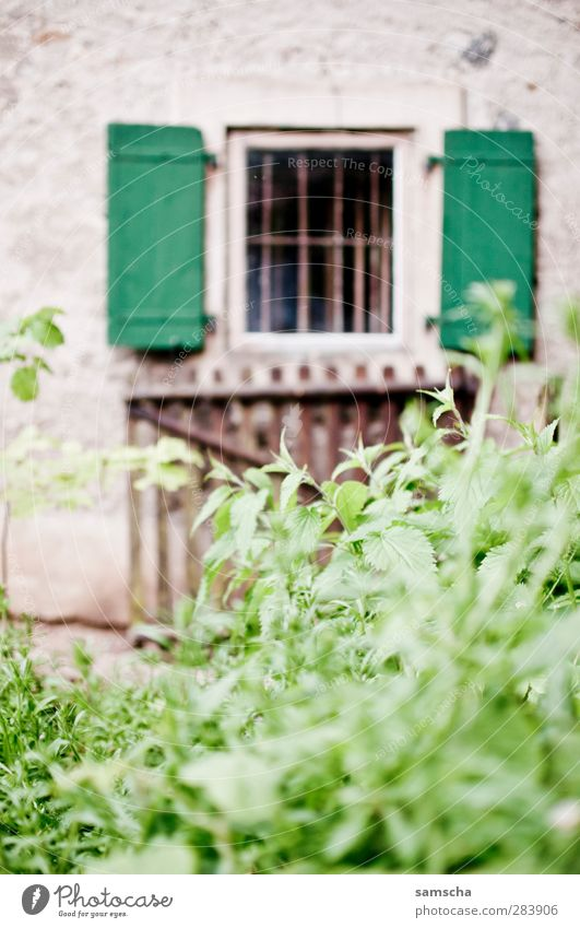 Window to the courtyard Nature Plant Bushes Leaf Foliage plant Garden Park Meadow House (Residential Structure) Detached house Wall (barrier) Wall (building)