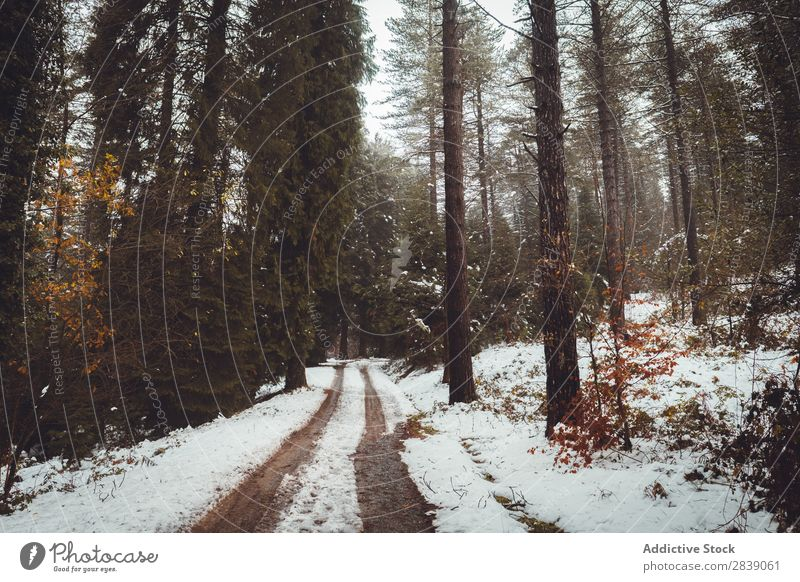 Road in white winter forest Forest Nature Winter Street White Snow Rural Landscape Trunk Seasons Park Beautiful Multicoloured Natural Leaf Light Environment