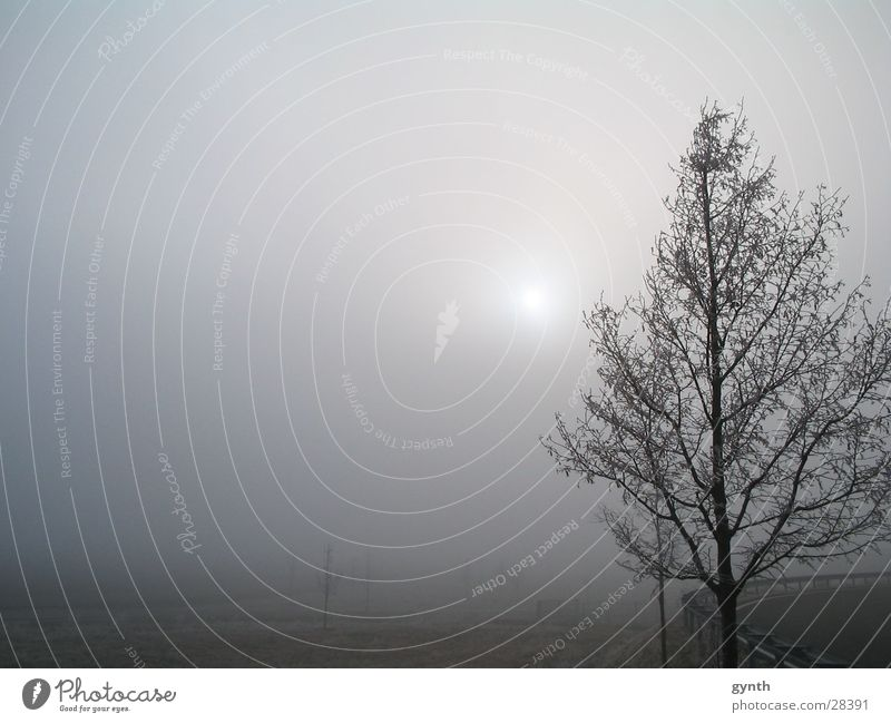 Ripe in December Fog Snowscape Fog bank Cold Hoar frost Afternoon sun penetration