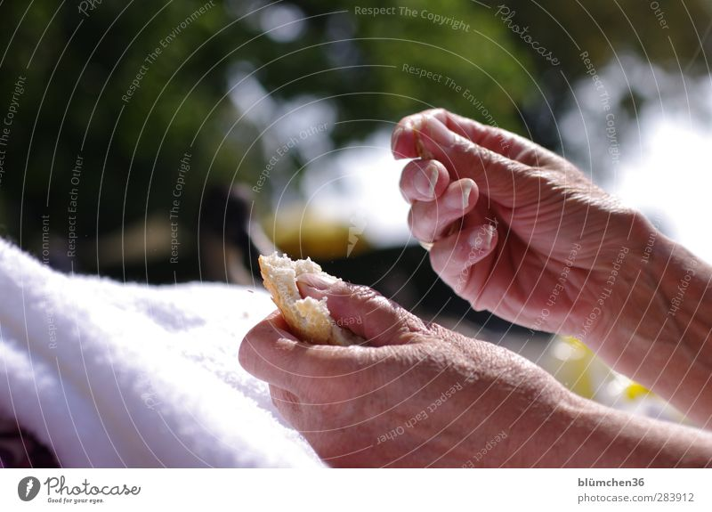 Old Hand Warmth Feminine Life Senior citizen Emotions Eating Time Natural Skin Fingers 60 years and older Transience Dry Wrinkle