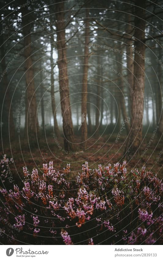 Flowers growing in woods Forest coniferous Nature Natural Landscape Exterior shot Scene Bushes Fog Mysterious Environment Blossom Growth Evergreen Plant scenery