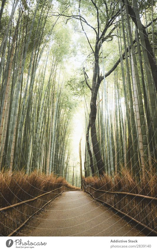 Pathway in bamboo grove Bamboo pathway Environment Corridor Nature Landscape Lanes & trails Garden Natural Street Attraction Green Destination Direction Serene