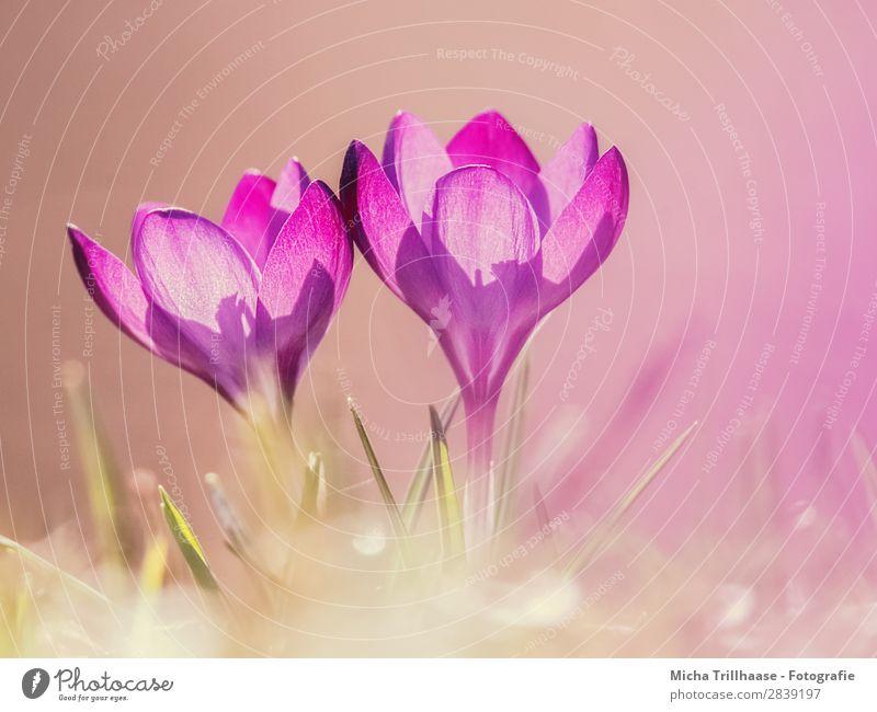 Nature Plant Green Sun Flower Yellow Spring Natural Meadow Grass Orange Pink Illuminate Fresh Glittering Elegant