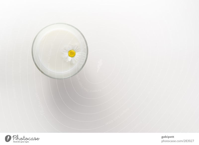 Beautiful White Flower Bright Exceptional Glass Fresh Beverage Soft Romance Wellness Within Daisy Exotic Milk Contents
