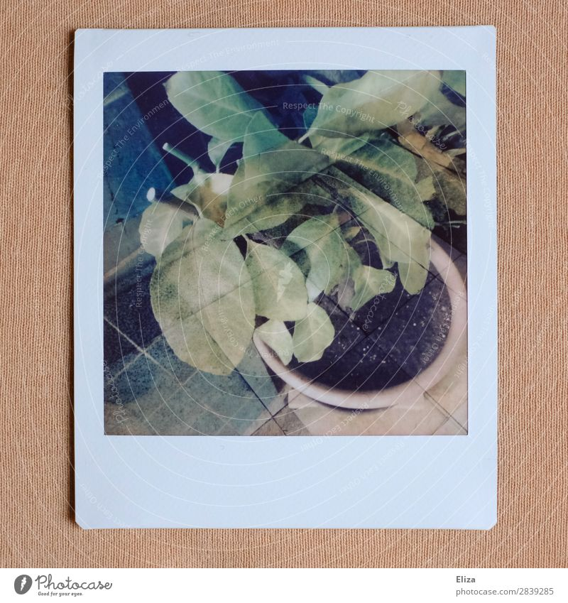 a random plant Plant Retro Double exposure Tile Houseplant Polaroid Analog Pink Green Subdued colour Lomography Deserted Copy Space bottom