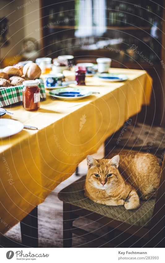 Cat Joy Animal Calm Relaxation Yellow Warmth Eating Brown Flat (apartment) Food Contentment Lifestyle Table Nutrition Observe