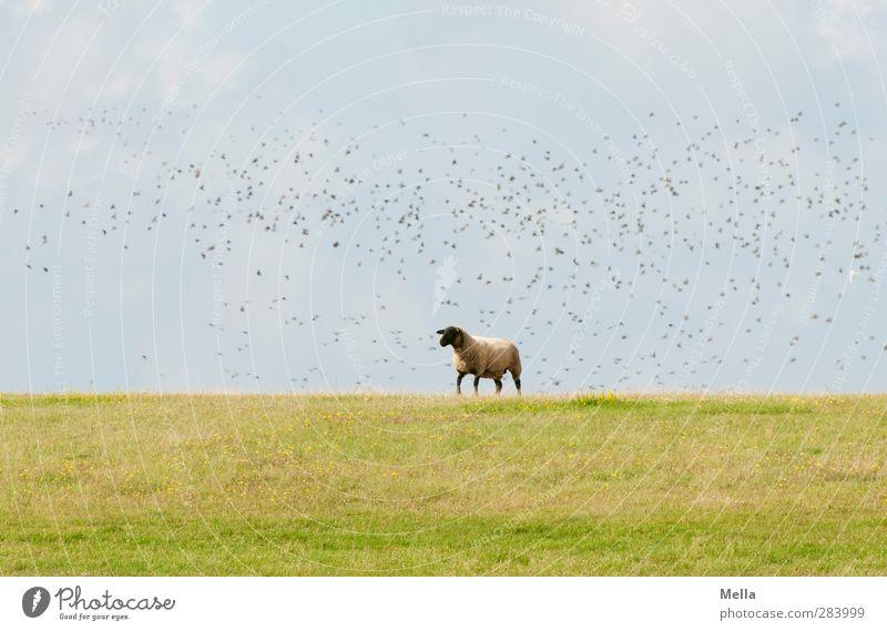 Nature Blue Green Animal Landscape Environment Meadow Grass Movement Funny Bird Going Flying Field Idyll Cute