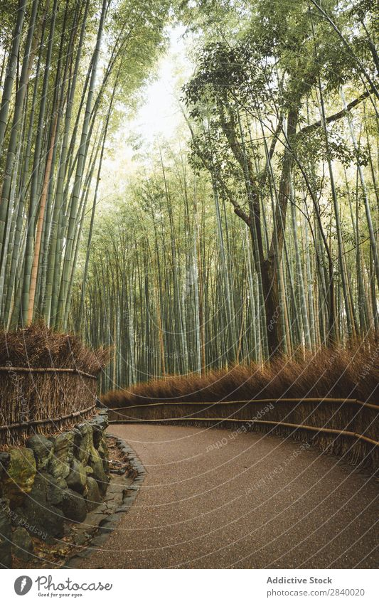 Pathway in beautiful bamboo forest Park Bamboo Landscape Garden Green Nature Corridor Vantage point