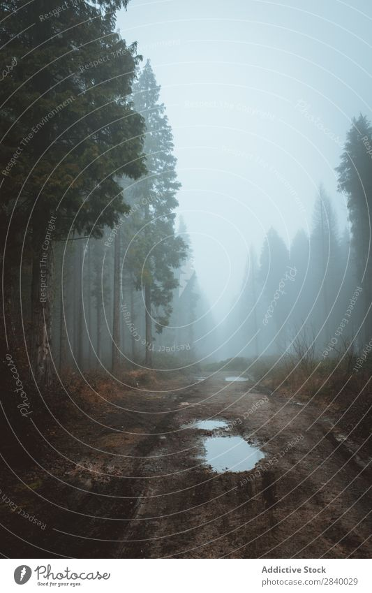 Tranquil mysterious road in fall woods Forest Fog Lanes & trails Cold Magic
