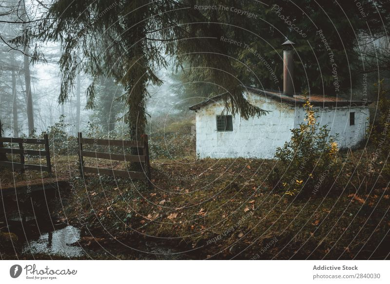 Small abandoned house in spooky woods Forest Mysterious Hut Fog Creepy Landscape Building Architecture Calm Spooky Grunge Nature Seasons Autumn Rustic Meadow