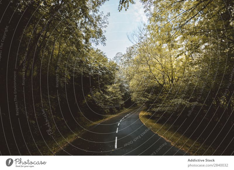 Landscape of road running away in woods Forest Mysterious Remote Rural Environment Lanes & trails