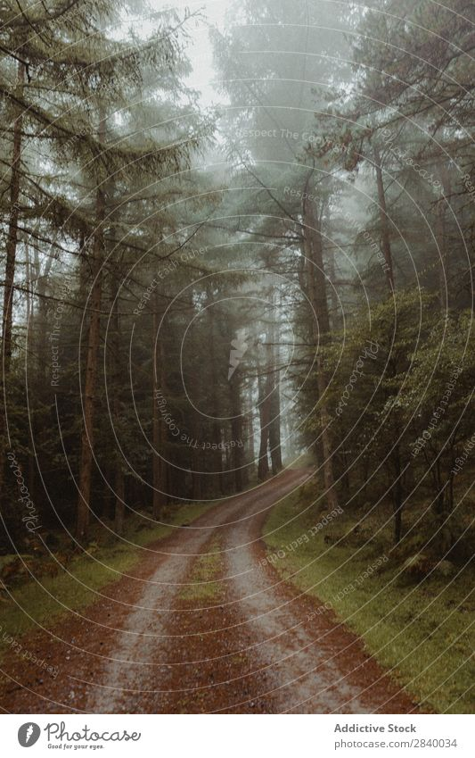 Foggy coniferous woods with pathway Forest Spooky Street Mysterious Nature scenery Environment tranquil Beauty Photography Mystery Vacation & Travel Footpath