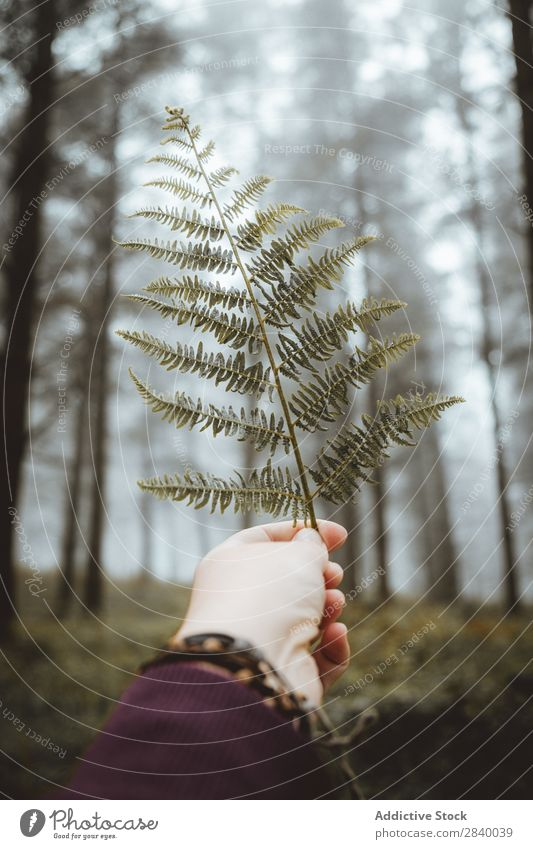 Crop hand with fern leaf on road Human being Fern Autumn Leaf Indicate Hold Wilderness Rustic Hand Park roadway paved Traveling Forest Calm Branch Woman Green